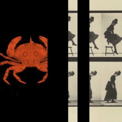 Bérénice Meinsohn - Vidéo - micro-folies